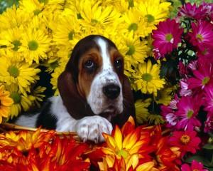 perro-en-primavera